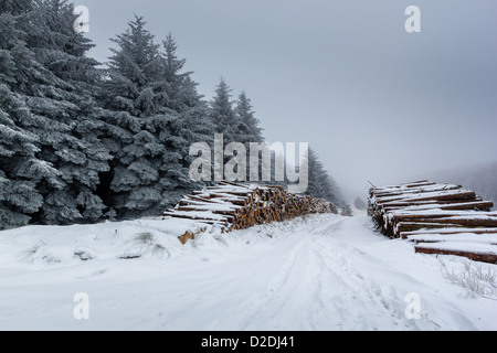 Snow covered logs and fur trees on a cold, foggy winter day - Stock Photo