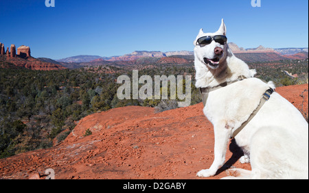 White German Shepherd at view point on Little Bell, with Cathedral Rock in Sedona in the distance - Stock Photo