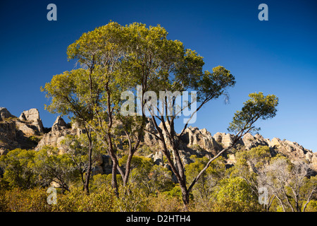Madagascar, Parc National de l'Isalo, green trees growing on central plateau - Stock Photo