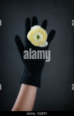 a hand in a black glove with a ring made out of a yellow buttercup flower - Stock Photo