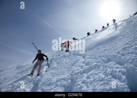 Ski touring in the Alps, ascent to Punta San Matteo, on the border of Lombardia and Trentino-Alto Adige, Italy, - Stock Photo
