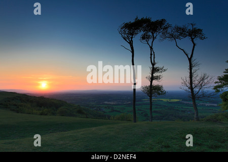 Sunset over Chanctonbury Ring, South Downs National Park, Sussex, England, UK - Stock Photo