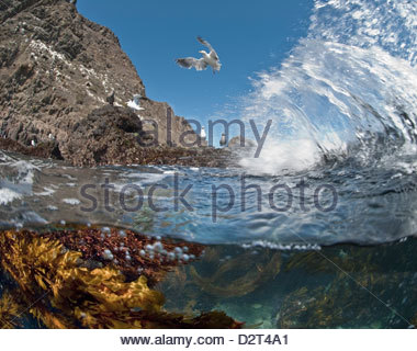 Underwater photo of Anacapa arch, kelp and birds, Channel Islands National Park, California, USA - Stock Photo