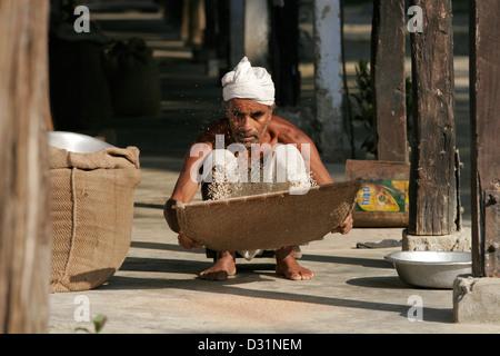 Old monk winnowing and cleaning rice using traditional basket, Kamalabari Satra, Hindu Vaishnavite monastery, Majuli - Stock Photo