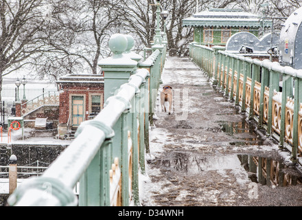 Dog runs across snow covered pedestrian bridge at Richmond lock and weir, Historic listed iron bridge,Richmond upon - Stock Photo
