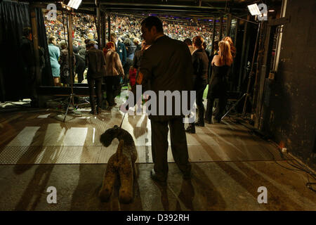 New York City, US, 12 February 2013. Terriers and their handlers are about to enter the show ring at the 137th Westminster - Stock Photo