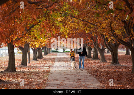 Father and son walking through park in autumn. Parkes, Canberra, Australian Capital Territory (ACT), Australia - Stock Photo