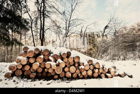 logs in snow - Stock Photo
