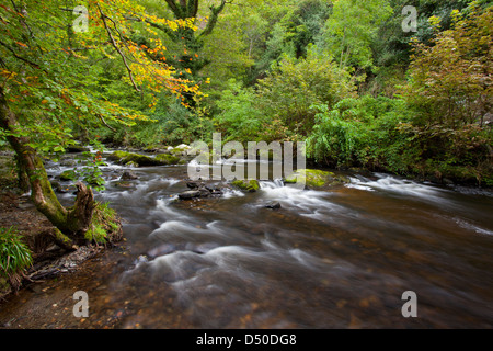 The River Vartry flowing through the Devil's Glen, County Wicklow, Ireland. - Stock Photo