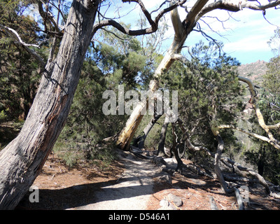 TREKKING PATH on Mount Amos, Tasmania, leading up to lookout over Wineglass Bay. Photo Tony Gale - Stock Photo
