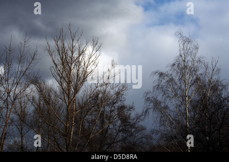 top trees without leaves against cloudy sky - Stock Photo