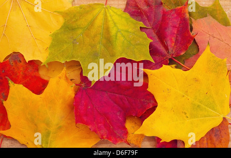 Background from autumn maple leaves - Stock Photo
