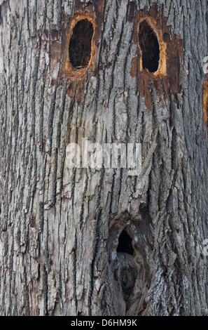 three holes in tree trunk making a face - Stock Photo