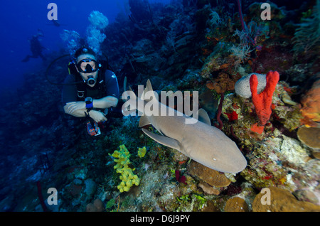 Close encounters with Nurse shark on G Spot Reef, Turks and Caicos, West Indies, Caribbean, Central America - Stock Photo