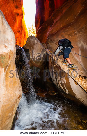 Slot canyon, Kanarra Creek Falls, near Cedar City, Utah USA - Stock Photo