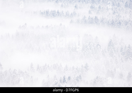 View on a snow covered pine forest in winter, with fog, Haute Savoie, France. - Stock Photo