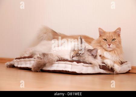 2 cats - Stock Photo