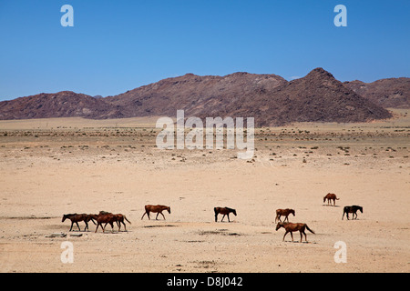 Wild horses, Garub, Namib-Naukluft National Park, near Aus, Southern Namibia, Africa - Stock Photo