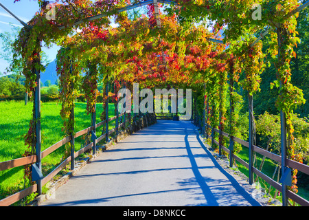 Beautiful walkway with green and red plants. - Stock Photo