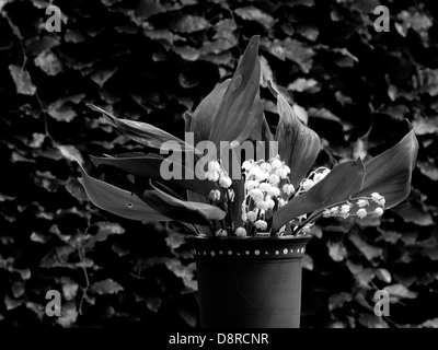 Flowers in black and white in a vase - Stock Photo