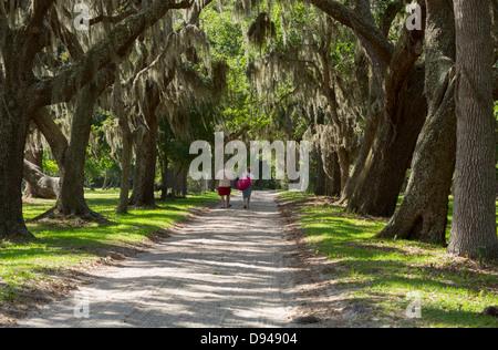Spanish moss drapes live oaks lining the old plantation road at Dungeness, Cumberland Island, Georgia - Stock Photo