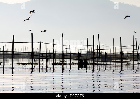 Birds flying by Lake Inle, Myanmar - Stock Photo