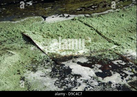 Spilt Oil Diesel Pollution Pig Spill Kit Bund - Stock Photo
