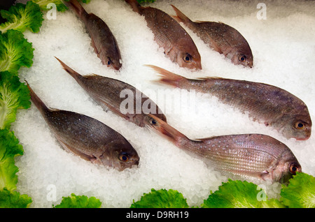 Fresh Snapper fish in ice on display in farmers market. - Stock Photo
