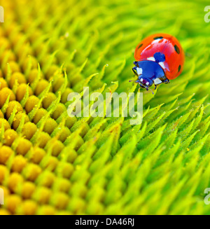 ladybug sits on a flower in summer time - Stock Photo