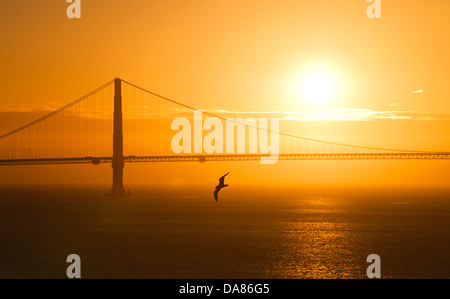 A seagull in front of the Golden Gate Bridge at sunset in San Francisco, California, USA, on February 28, 2011. - Stock Photo