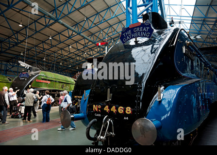 The Great Gathering - six A4 Class locomotives on display National Railway Museum York North Yorkshire England UK - Stock Photo
