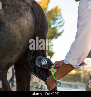 Young woman brushing the tail of her horse - Stock Photo