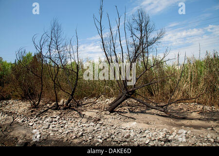Los Angeles, USA. 13th July, 2013. Fire damage to Los Angeles River the day  after a tanker truck overturned on - Stock Photo