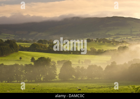 morning mist over forest, meadow and hedge landscape, United Kingdom, Wales - Stock Photo