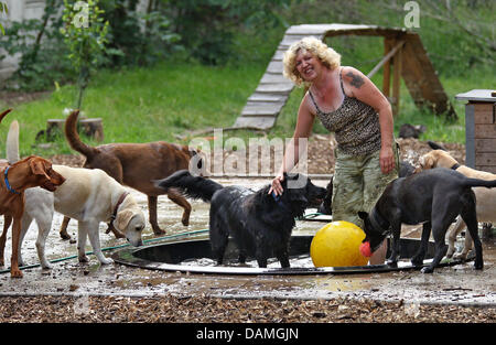 Dog-physiotherapist Petra Rudolph plays with dogs at her dog daycare centre in Leipzig, Germany, 06 June 2011. Rudolph - Stock Photo