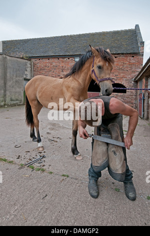 Male man Farrier working on hoof of horse to clean trim and file in stable yard of Oak Farm Alrewas Staffordshire - Stock Photo