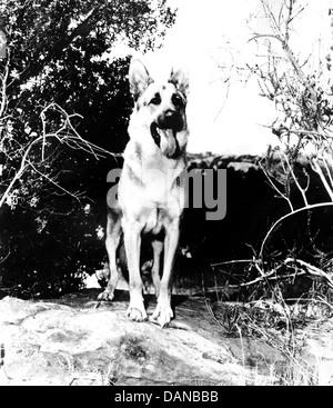 THE ADVENTURES OF RIN TIN TIN (TV) (1954 - 1959) AORT 002 MOVIESTORE COLLECTION LTD - Stock Photo