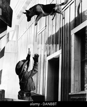THE ADVENTURES OF RIN TIN TIN (TV) (1954 - 1959) JAMES BROWN, AORT 007 MOVIESTORE COLLECTION LTD - Stock Photo