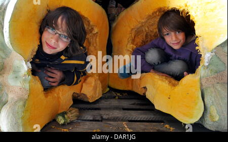 FILE - An archive picture dated 18 September 2010 shows two boys inside a winter squash, which has more than 400 - Stock Photo