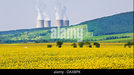 field of sunflowers and nuclear power plant - Stock Photo