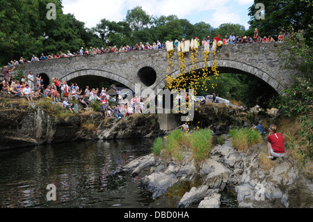 Plastic ducks being dropped from Cenarth Bridge into the Teifi River at the start of a duck race Wales Cymru UK - Stock Photo