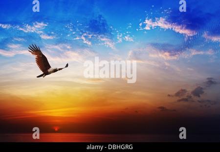 Bird of prey - Brahminy Kite flight on beautiful sunset above the sea background - Stock Photo