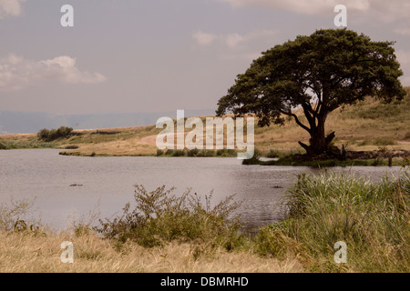 View of a hippo pond in the Ngorongoro Crater in Tanzania, Africa. There are two hippos viewable in the pond. This - Stock Photo