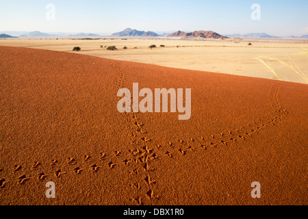 Animal tracks in sand, Namib desert, Namibia, May 2013 - Stock Photo