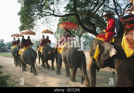 Elephant trekking in Ayutthaya. Thailand - Stock Photo