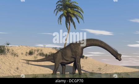 Large Brachiosaurus walking along the water's edge. - Stock Photo