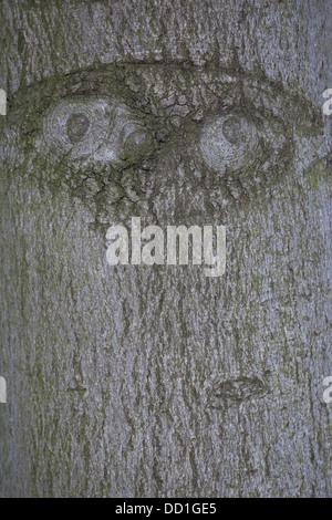 Tree face, bark, trunk, eye, eyes, Baumgesicht, Rinde, Stamm, Waldgeist, Auge, Baumgeist, Naturgeist, natural mind, - Stock Photo