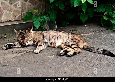 Sleeping Street Cat on the sidewalk. - Stock Photo