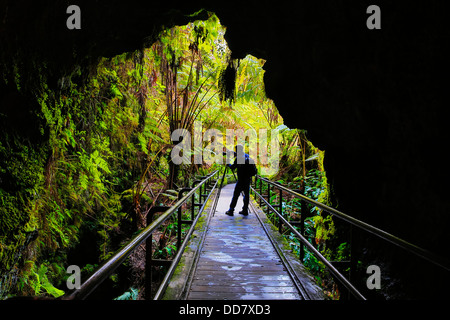 Thurston Lava Tube, Hawaii Volcanoes National Park, Island of Hawaii - Stock Photo