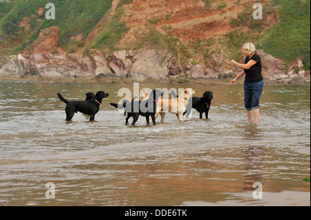labradors and their owner playing on a beach - Stock Photo